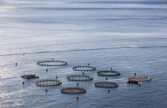 Warming climate could worsen global shortage of omega-3