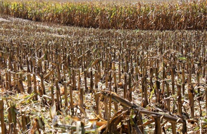 Drought threatens Southern African corn crop prospects