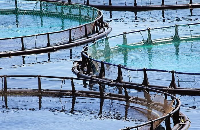 Investments aim to develop Myanmar's aquaculture sector
