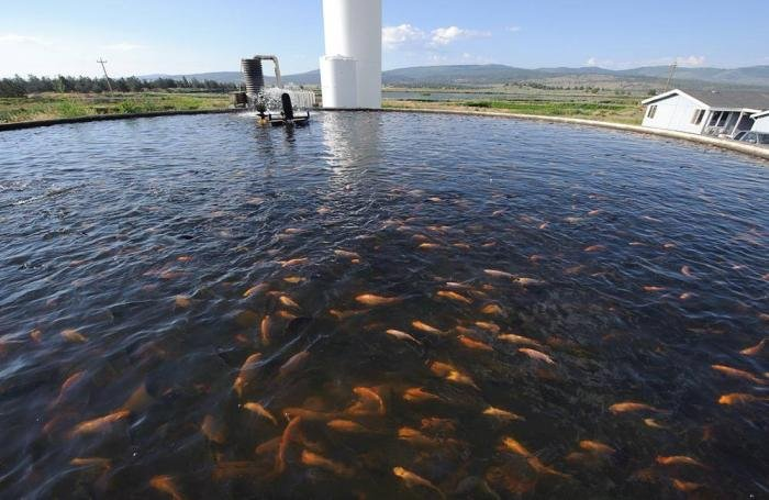 New study aims to make aquaculture work safer