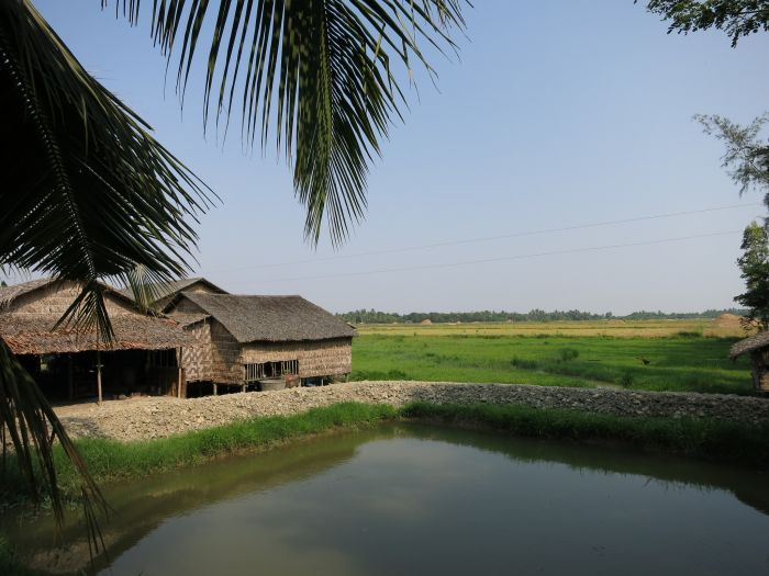 Myanmar collaboration to enhance rice, fish production