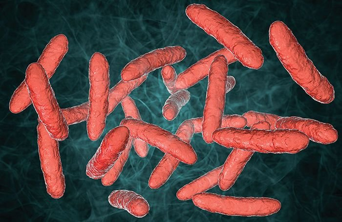 How gut microbes could prevent African swine fever