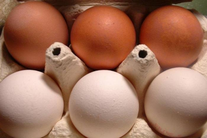 Cage-free layers: white or brown eggs?