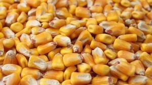 Grains Council report: US corn exports show good quality