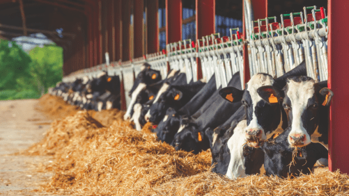 Consumers, trade, weather sway dairy feed volumes