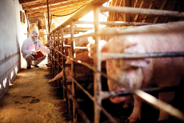 NPPC seeks payment for farmers forced to cull herds