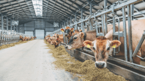 Examining the components of optimal dairy cow nutrition