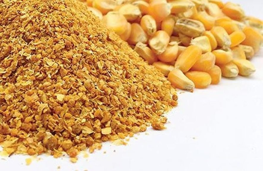 USGC looks to increase DDGS demand in SE Asia aquafeed