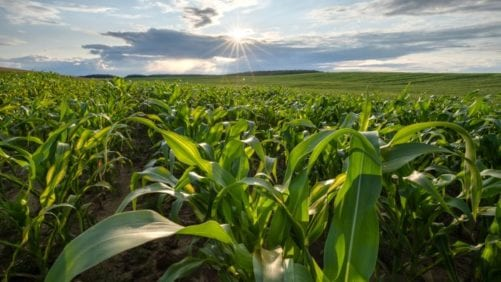 US closing gap between production, use of organic corn