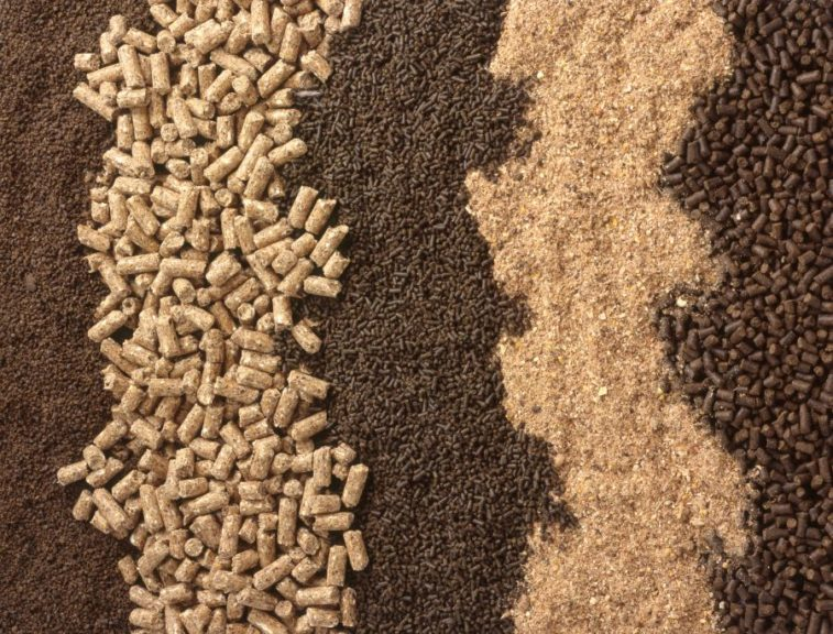 Latin America feed production grows despite challenges